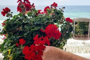 what-is-deadheading-why-should-you
