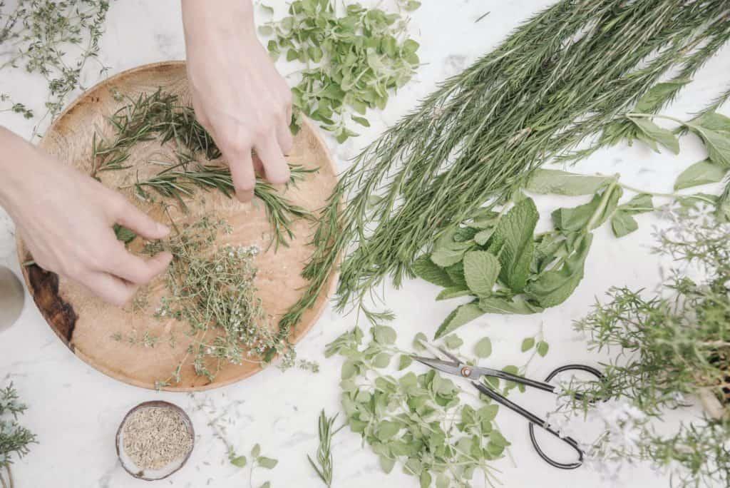 harvesting-dried-herbs