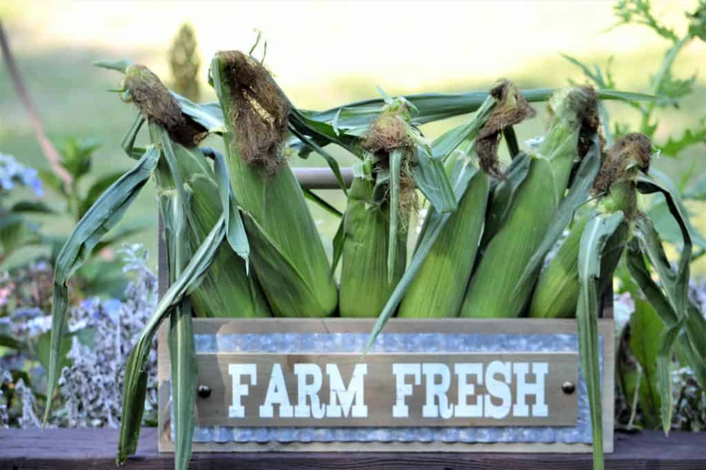 Fresh-corn-from-the-farmers-market