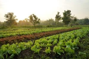 organic-farm-with-no-till-methods