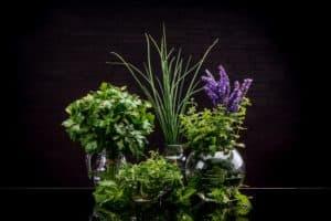 herbs-that-grow-in-shade-mint-sorrel-oregano-cilantro-garden