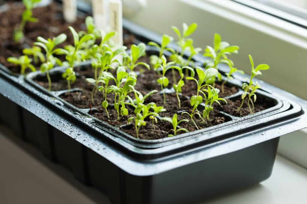 citizen-seed-trial-germination-tray