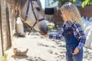85+ Best Horse Farm Names for Your Stable, Ranch, or Riding School