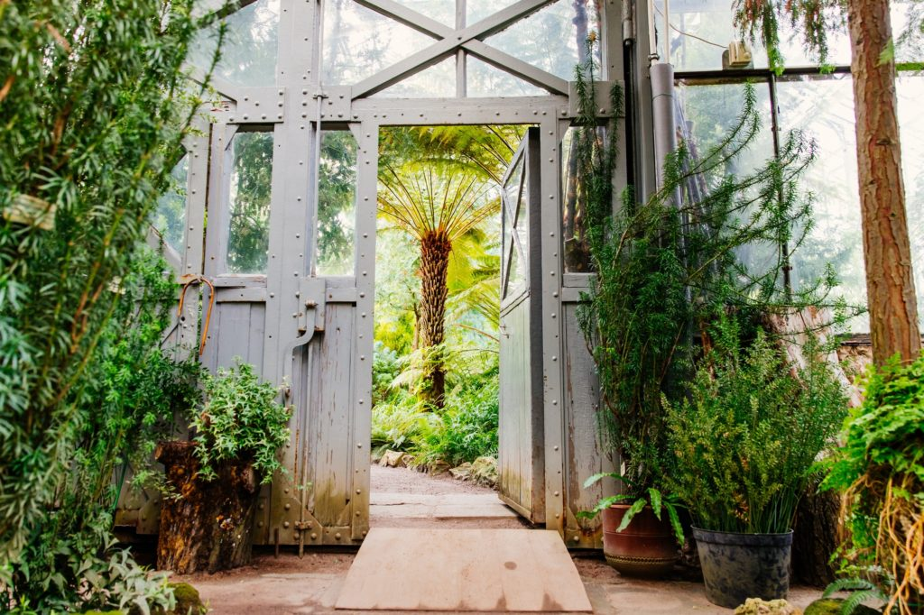 Vintage steel and glass doorway in greenhouse with lush plants under glass ceiling
