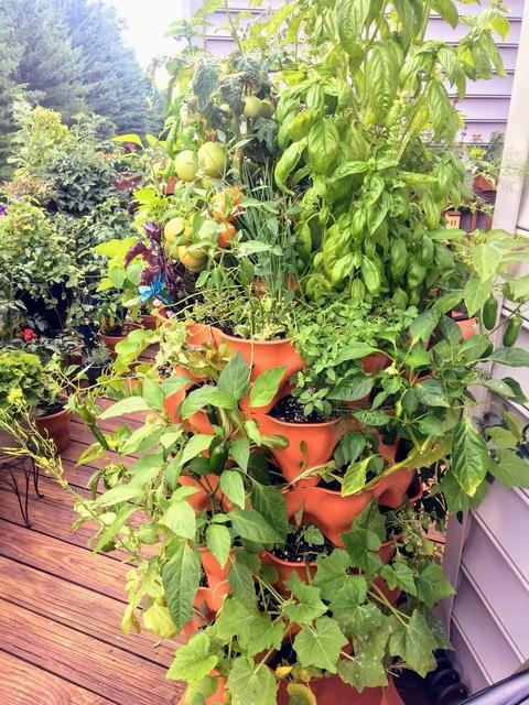 amazing garden tower plants