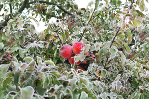 Top 9 Best Fruit Trees for Zone 4 Gardens