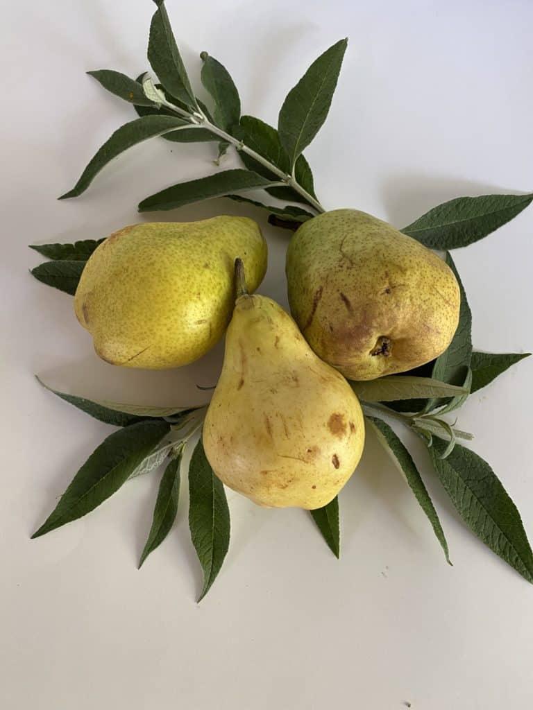 Bartlett-Pear-Fruit-Tree