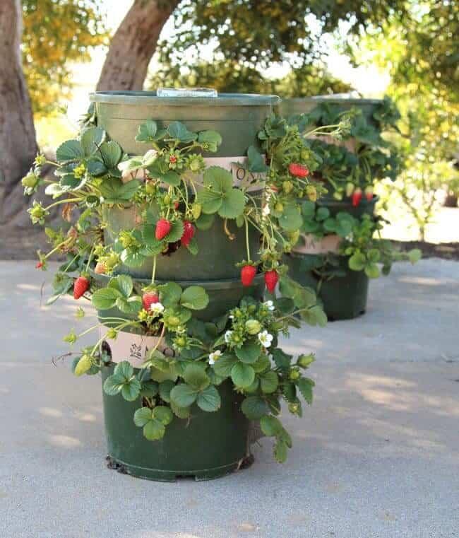 diy strawberry planter by apieceofrainbow