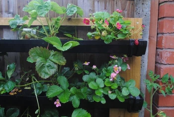 diy strawberry planter by hungryhealthyhappy