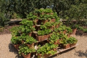 7 DIY Strawberry Planter Ideas and Plans for the Best Strawberries!