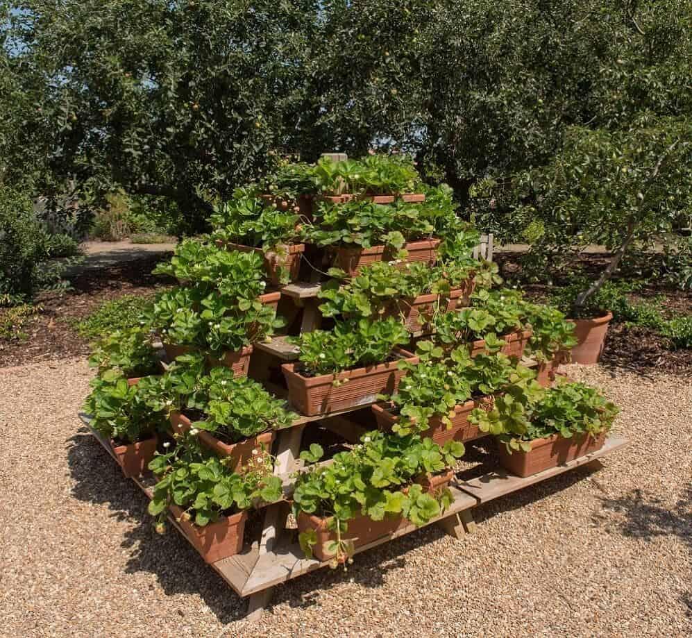 legendary strawberry planter growing tower