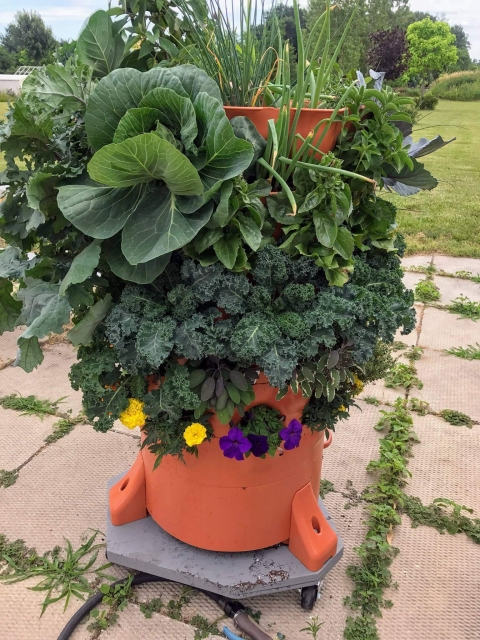 nice garden tower with flowers cabbage