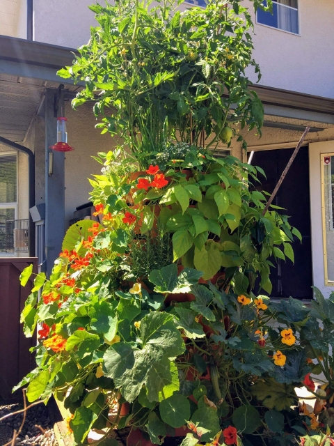 productive garden tower tomatoes pumpkin flowers