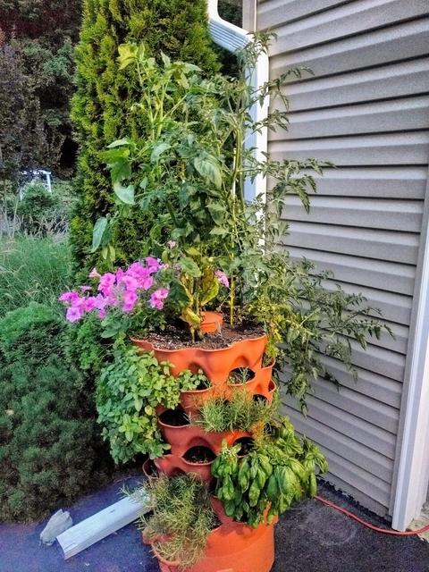 very succesful garden tower plants