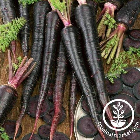Carrot Black Nebula Seeds - True Leaf Market