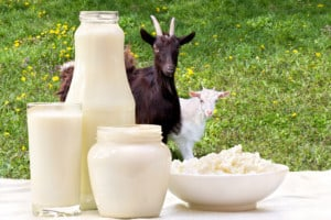 How to Pasteurize Goat Milk at Home [3 Simple Ways]