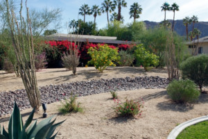 how to xeriscape on a budget front yard backyard